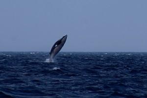 whale pic